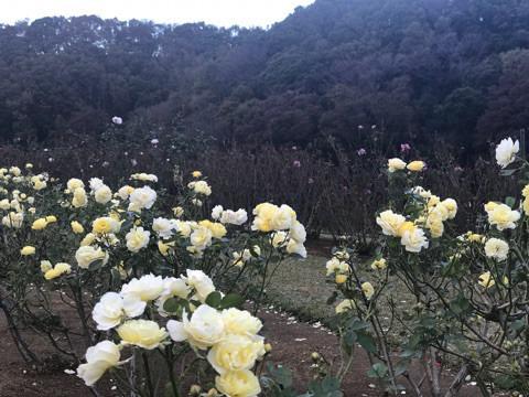 f:id:masami_takasu:20190103035013j:plain