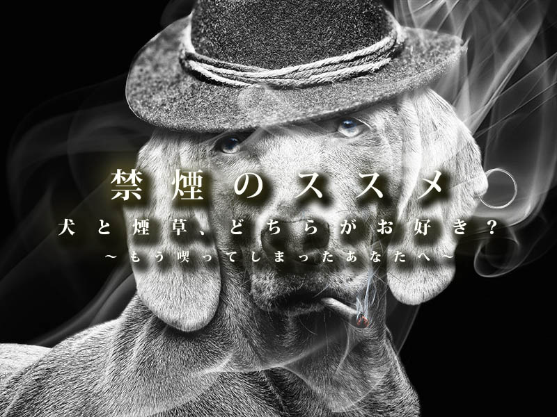f:id:masami_takasu:20190118185511j:plain