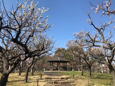 f:id:masami_takasu:20190131190657j:plain