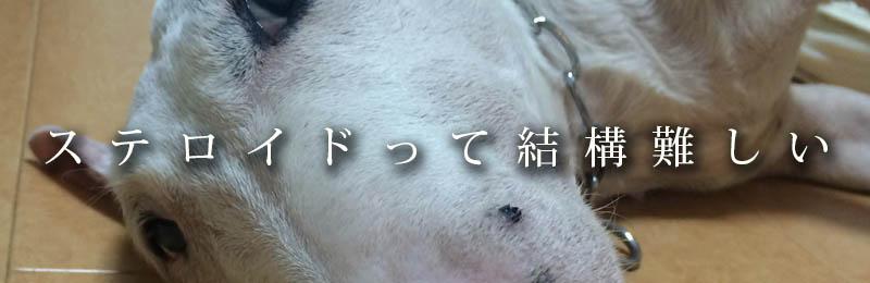 f:id:masami_takasu:20190201074936j:plain