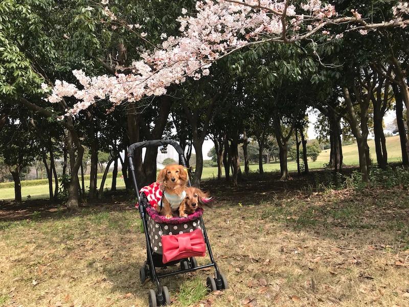 f:id:masami_takasu:20190201184925j:plain