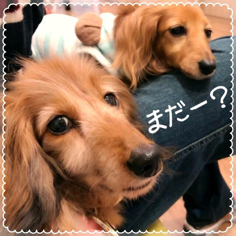 f:id:masami_takasu:20190201203823j:plain