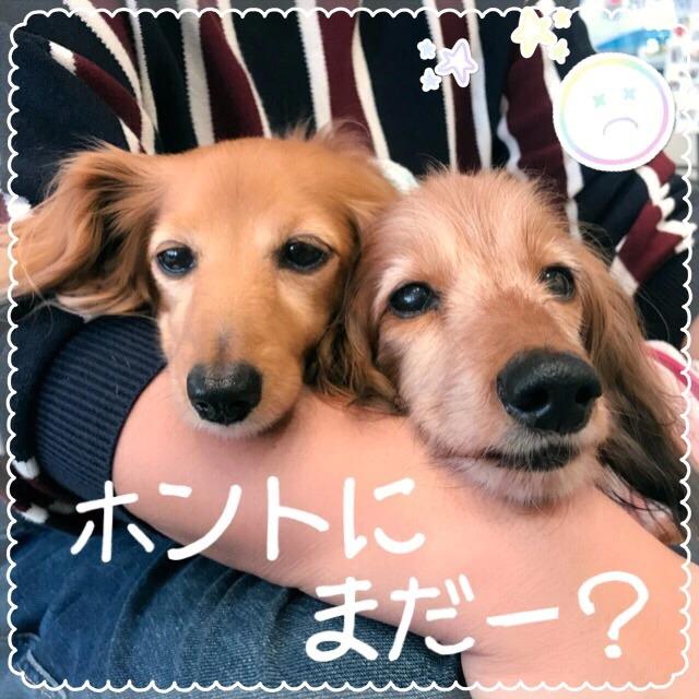 f:id:masami_takasu:20190204140702j:plain