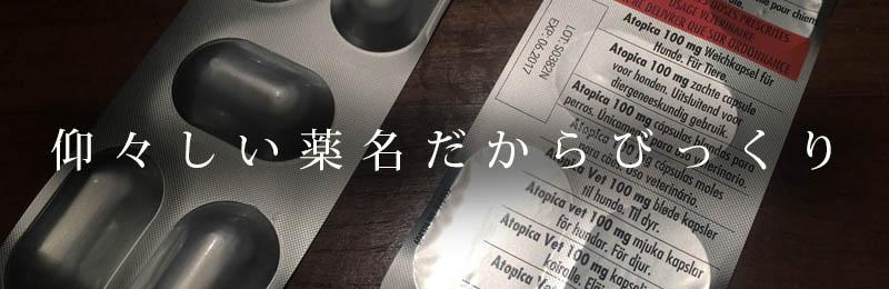 f:id:masami_takasu:20190205154209j:plain