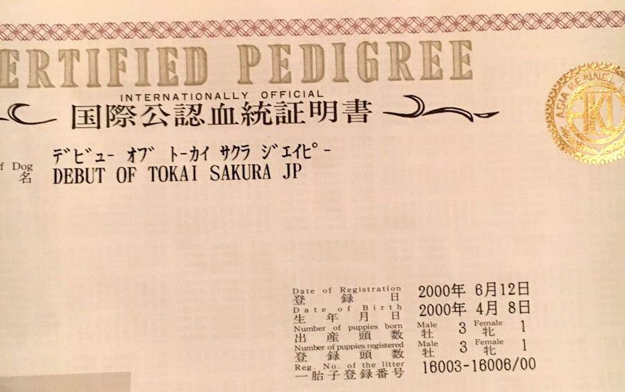 f:id:masami_takasu:20190207001444j:plain