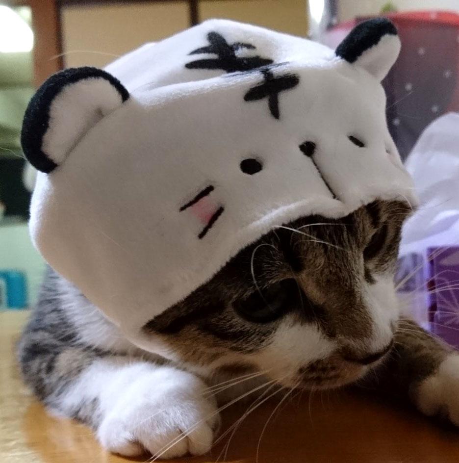 f:id:masami_takasu:20190213114847j:plain