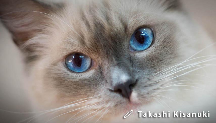 f:id:masami_takasu:20190223161547j:plain