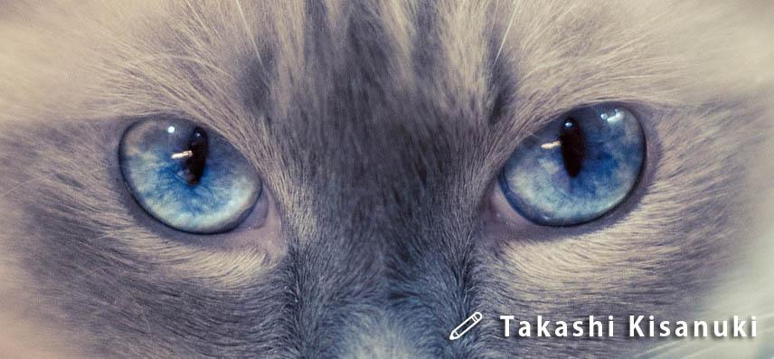 f:id:masami_takasu:20190223161638j:plain