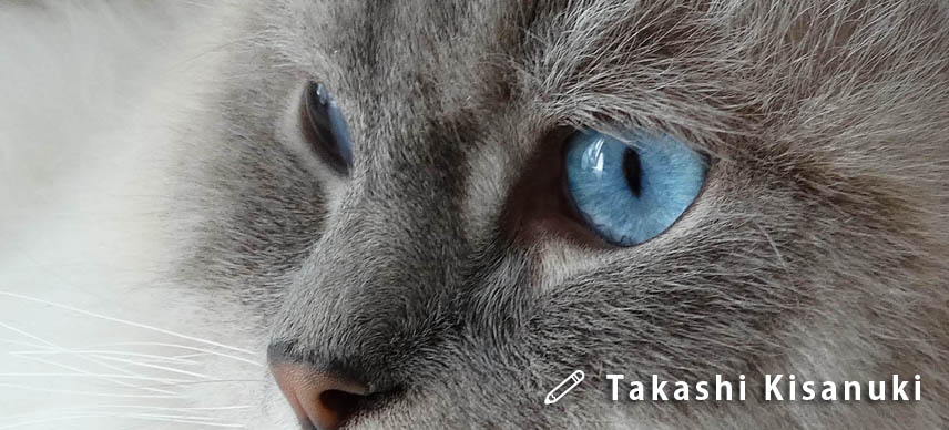 f:id:masami_takasu:20190223163840j:plain