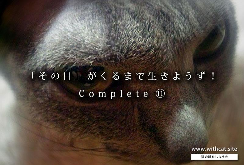 f:id:masami_takasu:20190225120124j:plain