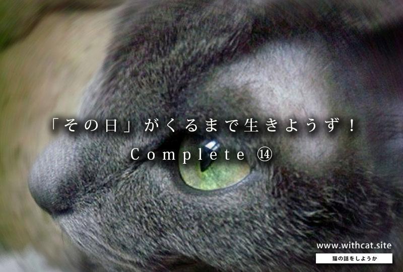 f:id:masami_takasu:20190225124151j:plain