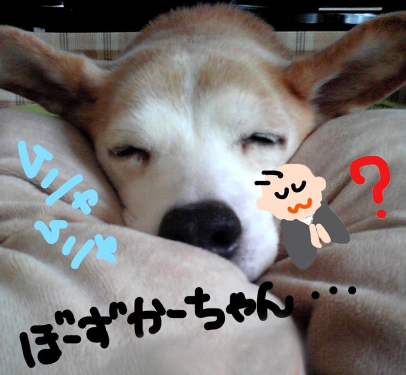 f:id:masami_takasu:20190301150712j:plain