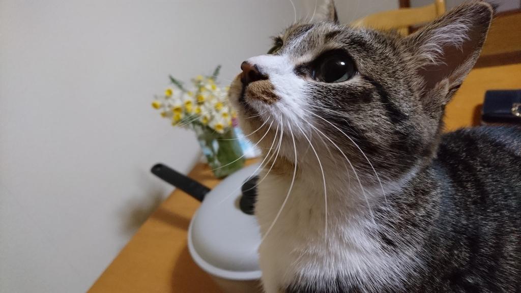 f:id:masami_takasu:20190306162031j:plain