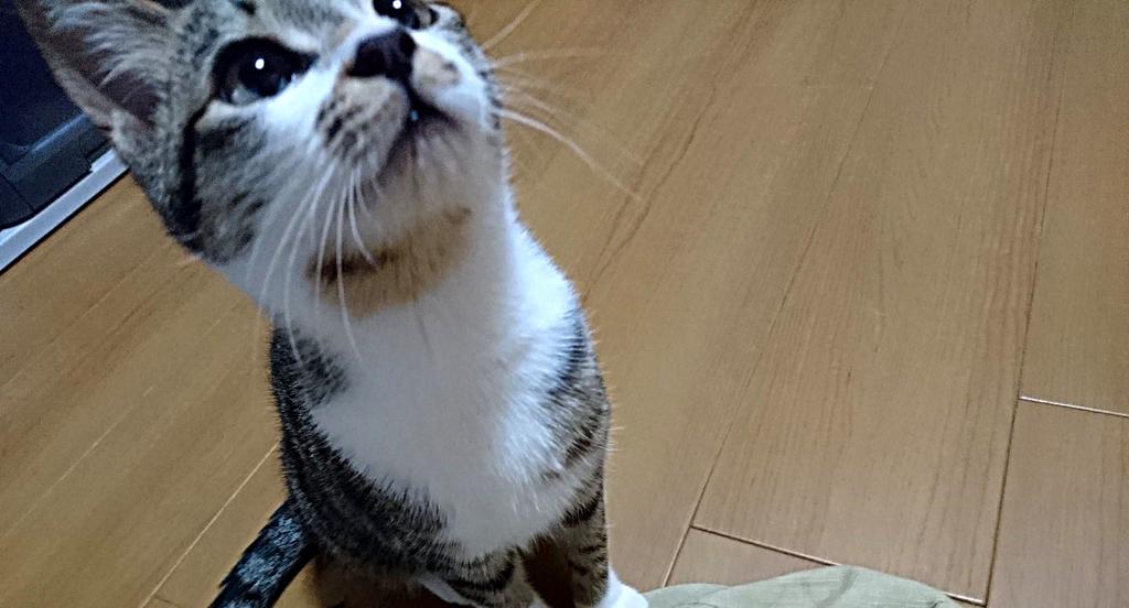 f:id:masami_takasu:20190308110132j:plain