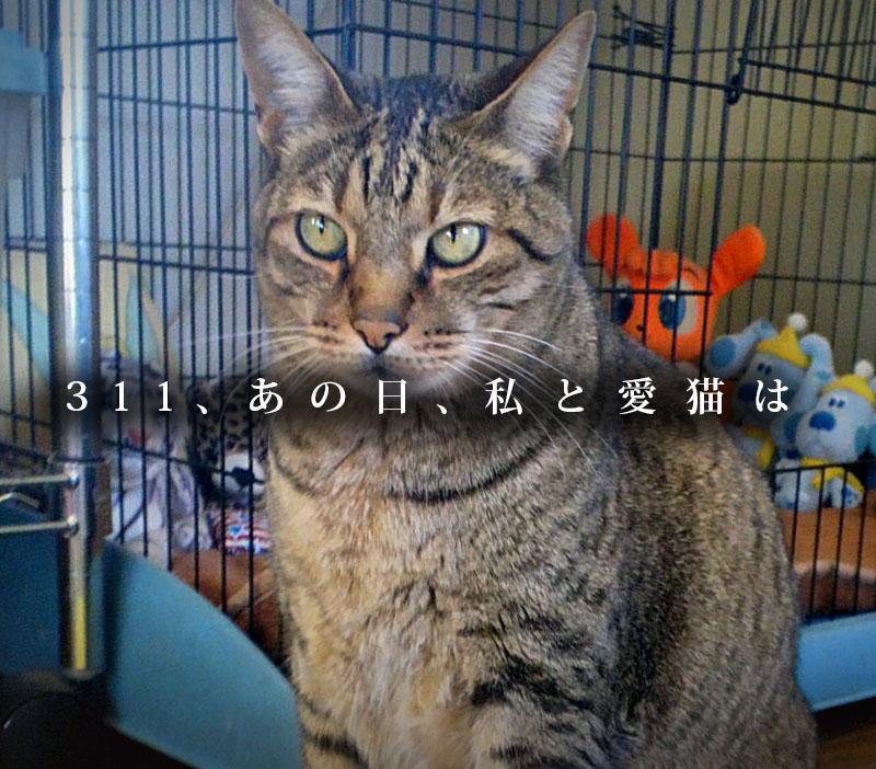 f:id:masami_takasu:20190310184248j:plain