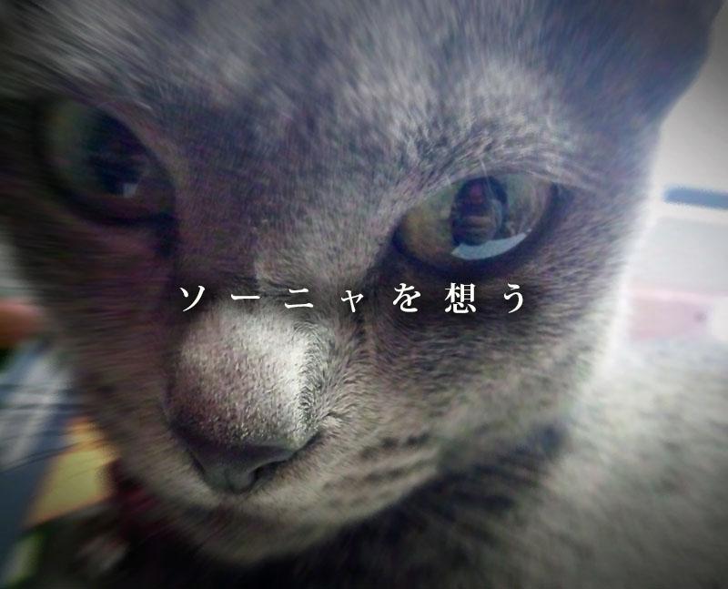 f:id:masami_takasu:20190329114311j:plain