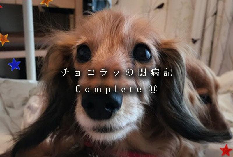 f:id:masami_takasu:20190401200540j:plain