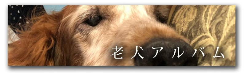 老犬アルバム