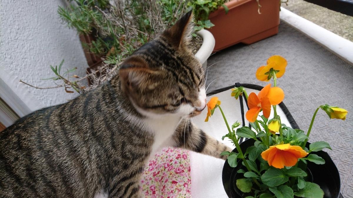 花のにおいをかぐマナ