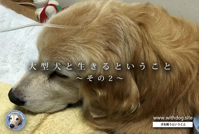大型犬と生きる