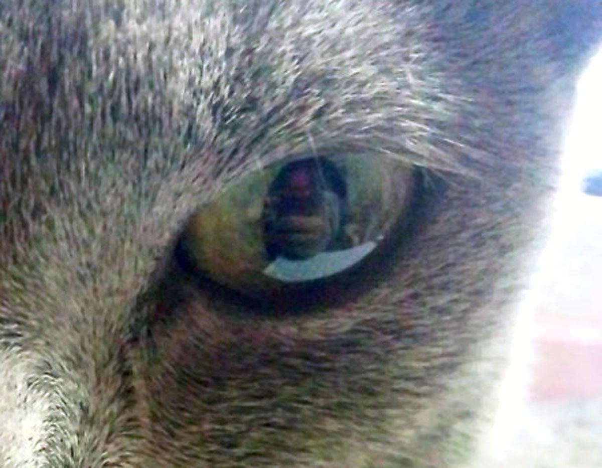 ソーニャの瞳