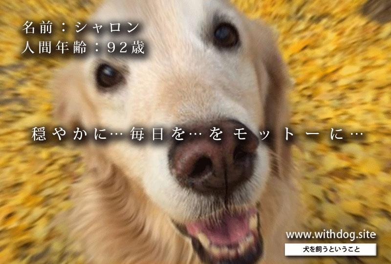 f:id:masami_takasu:20190421085605j:plain