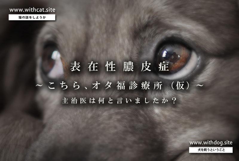 膿皮症_扉