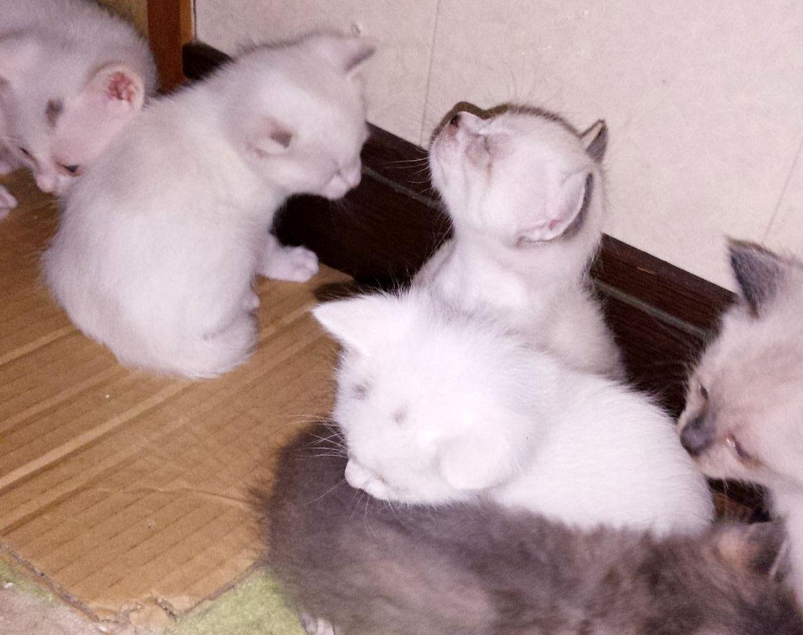 生まれた子猫たち