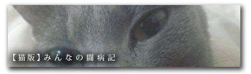 みんなの闘病記_猫