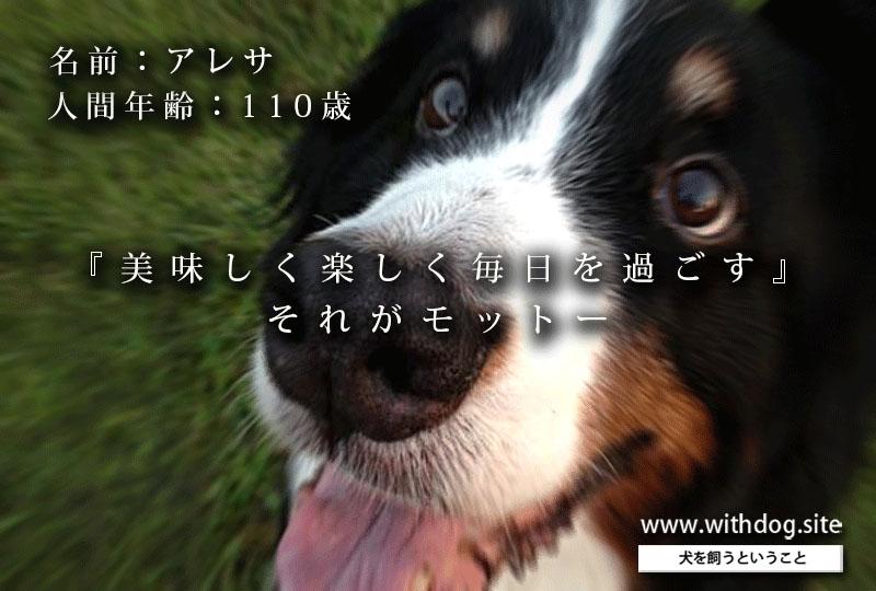 老犬アルバム_アレサさん