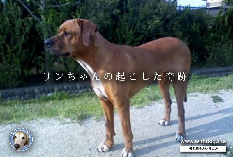 f:id:masami_takasu:20190522012617j:plain