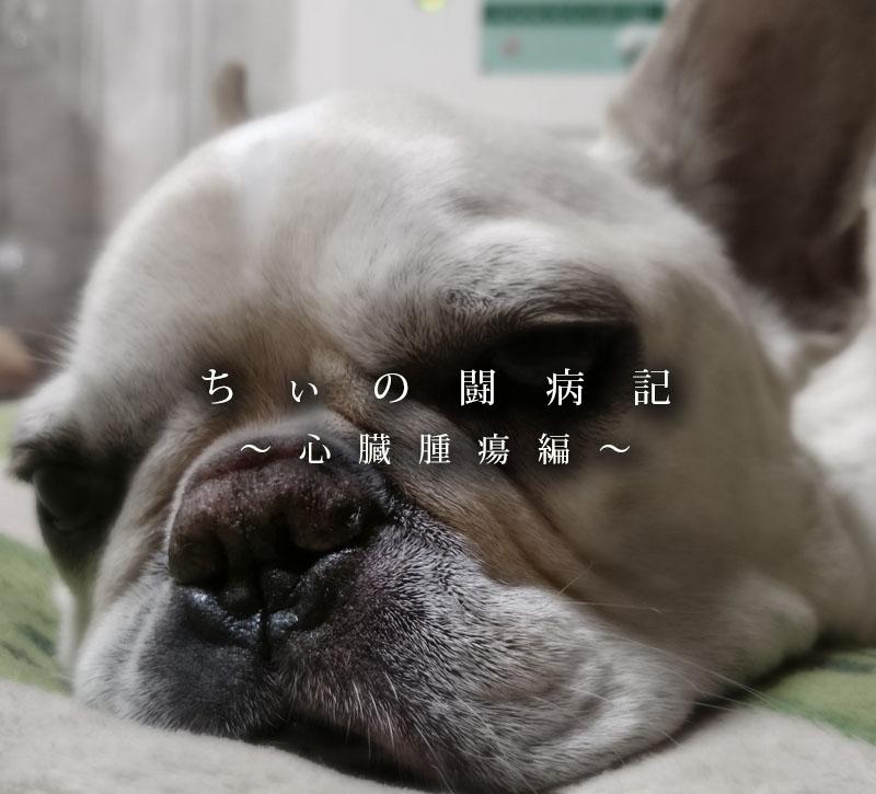 ちぃの闘病記_心臓腫瘍編