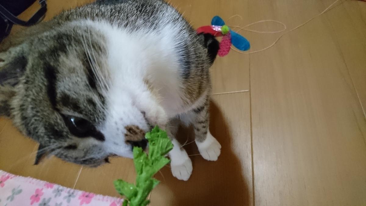 f:id:masami_takasu:20190617173222j:plain