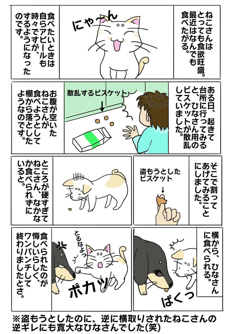 ねこさん_漫画