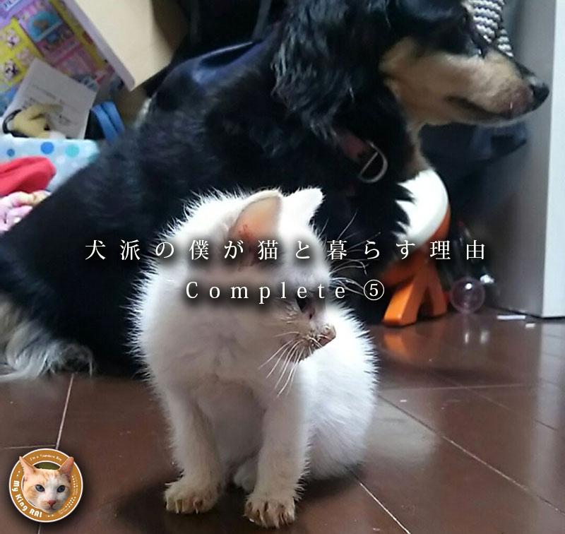 犬派の僕が猫と暮らす理由