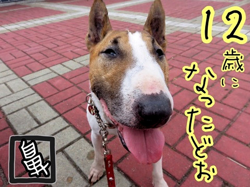 f:id:masami_takasu:20190708153750j:plain