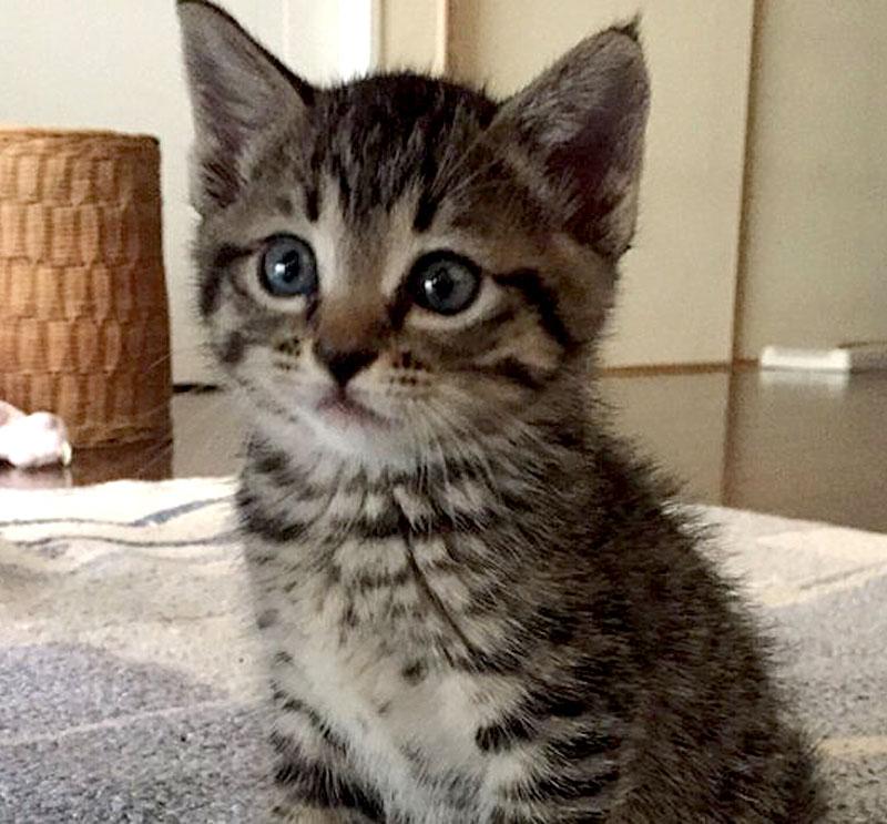 うちの子がうちにくるまで_猫