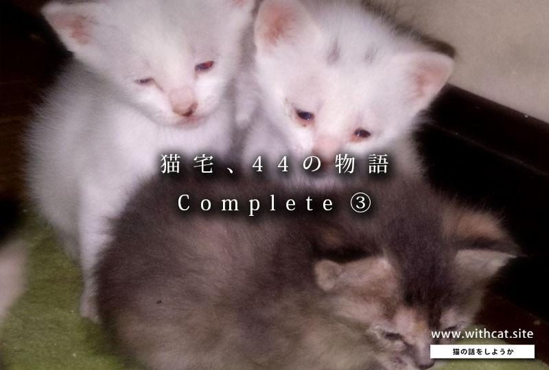 猫宅の話_扉③