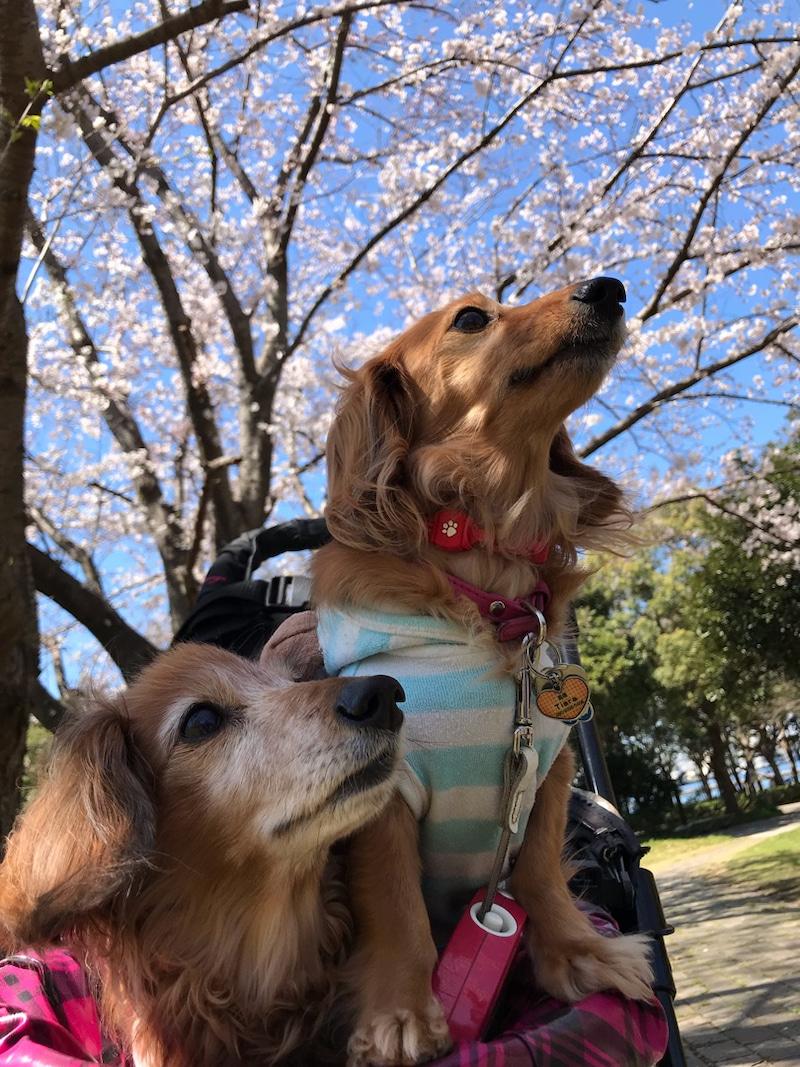 f:id:masami_takasu:20191022150654j:plain