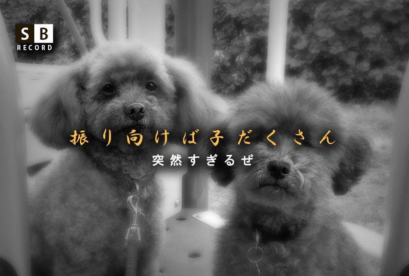 f:id:masami_takasu:20191214091502j:plain
