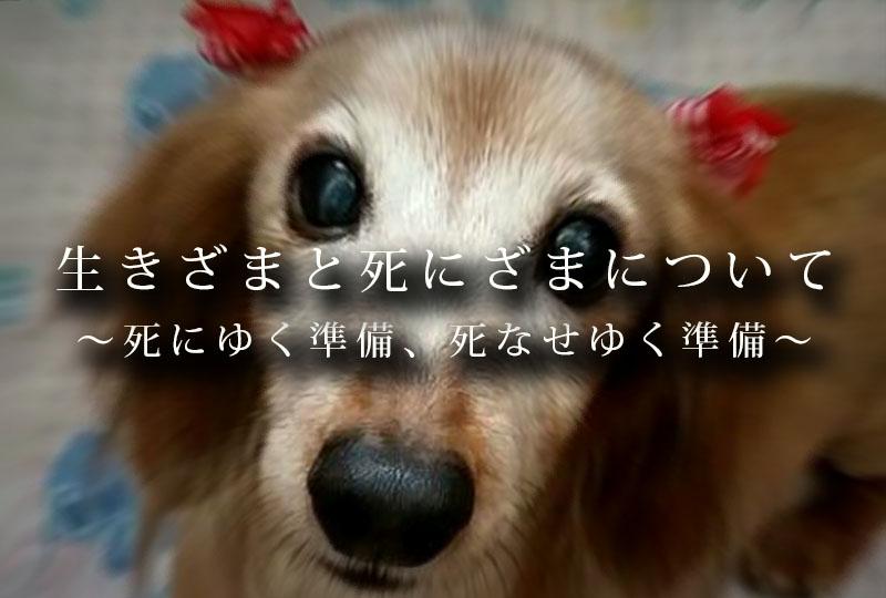 f:id:masami_takasu:20191218191124j:plain