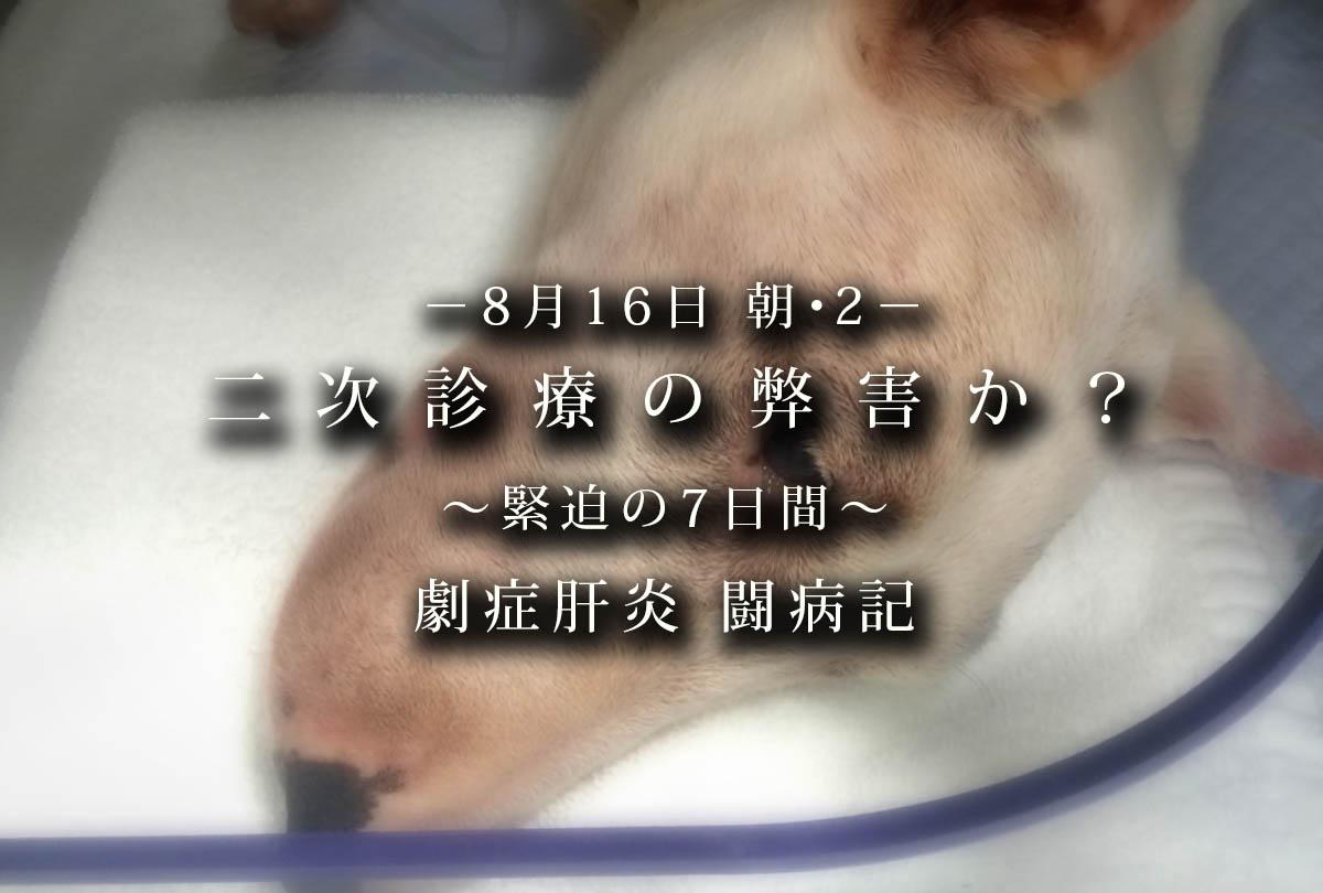 劇症肝炎闘病記