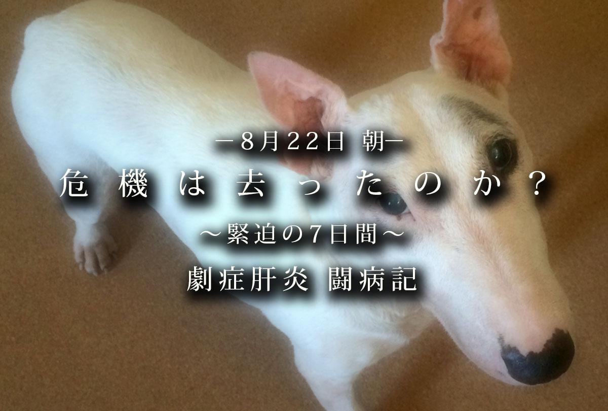 f:id:masami_takasu:20200206181014j:plain