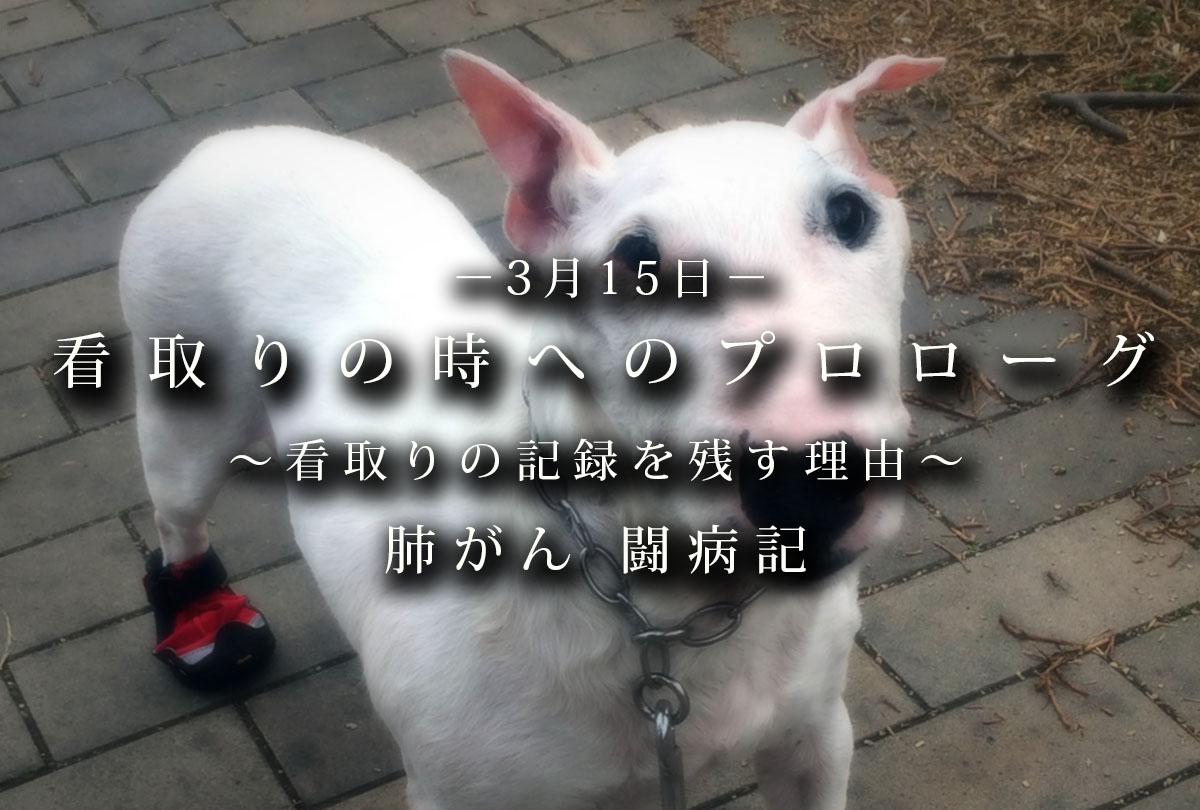 f:id:masami_takasu:20200211083242j:plain