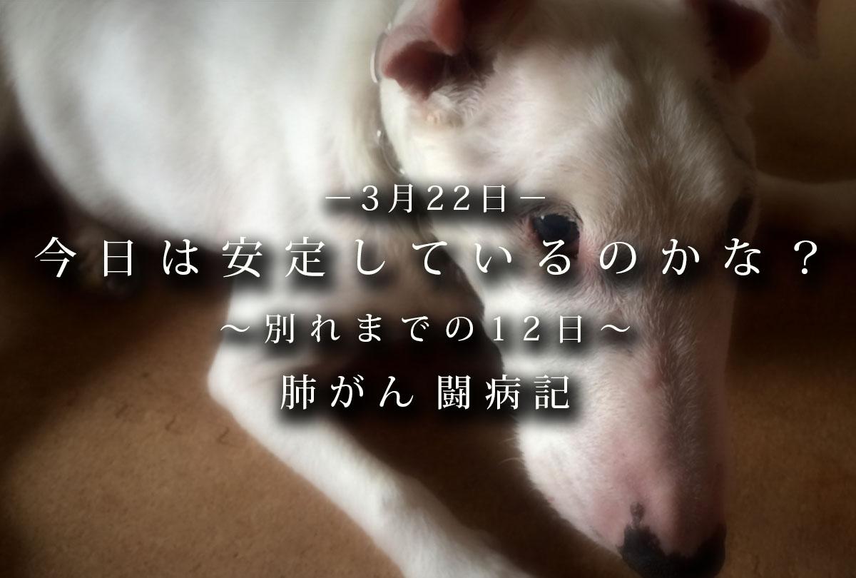 f:id:masami_takasu:20200218004025j:plain