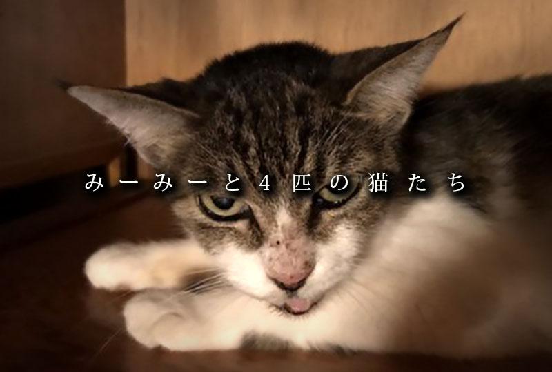 みーみーと4匹の猫たち