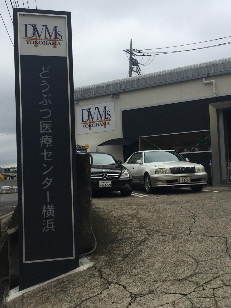 DVMsどうぶつ医療センター