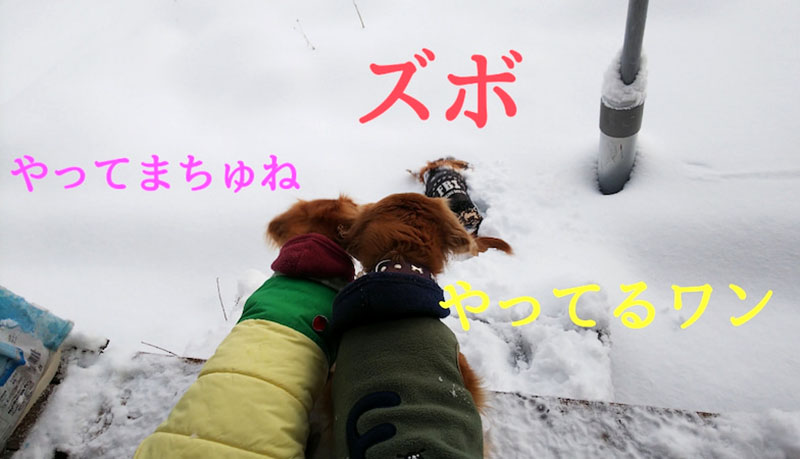 f:id:masami_takasu:20210607141416j:plain