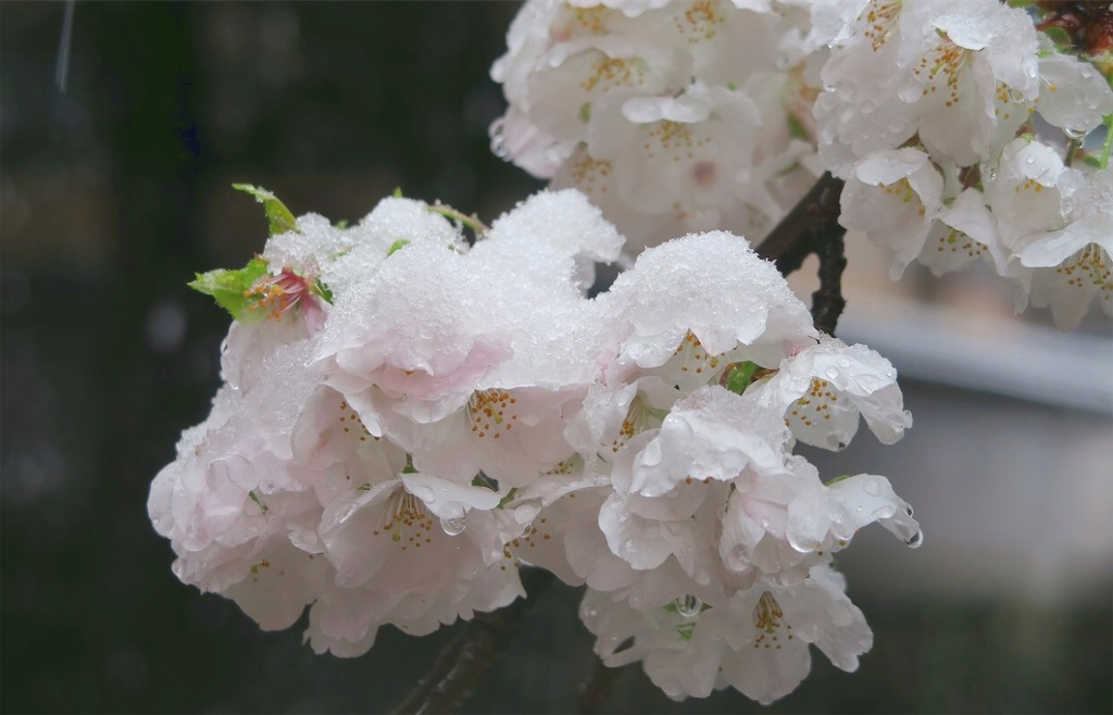 f:id:masanori-kato1972:20200329212425j:image