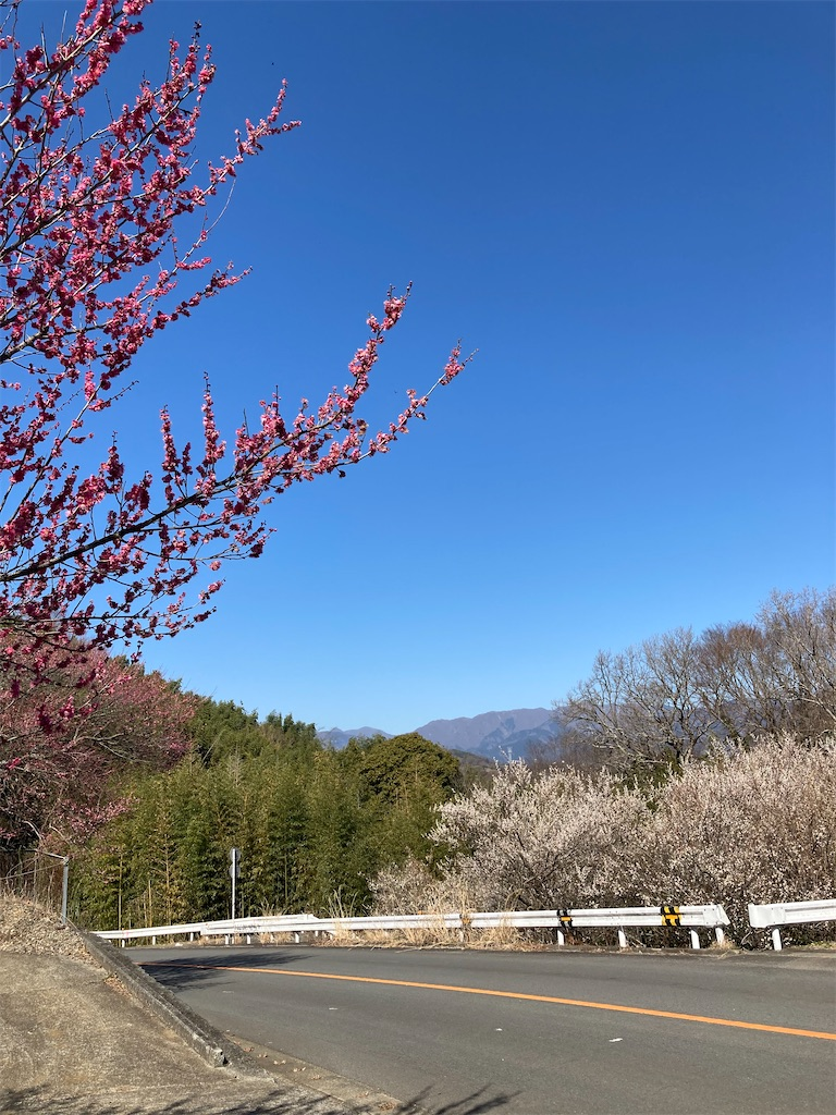 f:id:masaru-arameya:20210222151020j:image